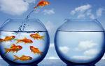 Как начать новую жизнь и изменить себя: с чего начинать?